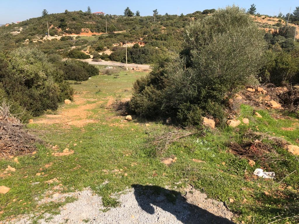 Greenhill Land