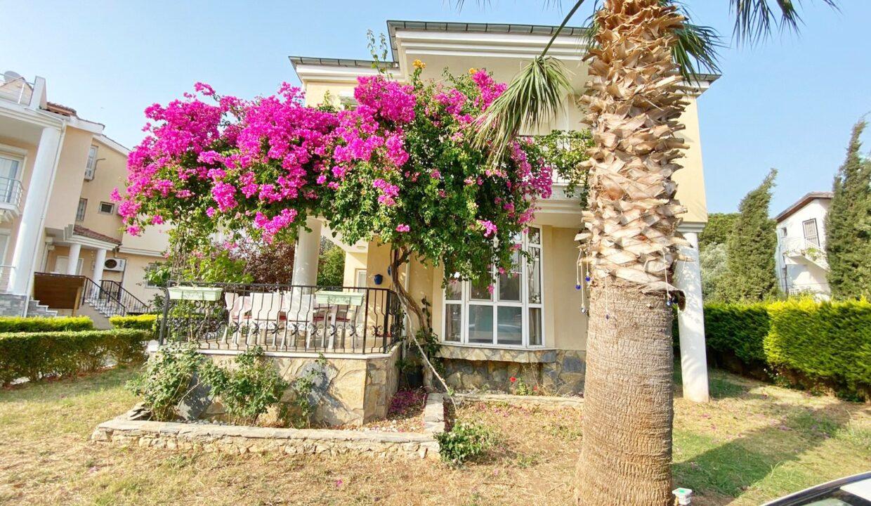 Aegean Pine Ozkan (2)